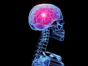 Обои Мозг