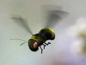 Обои Пчелка