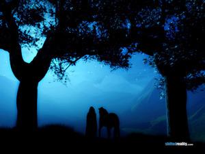Обои Таинственный лес