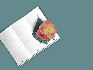 Обои Записка с розой
