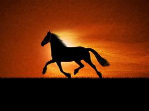 Обои Лошадь