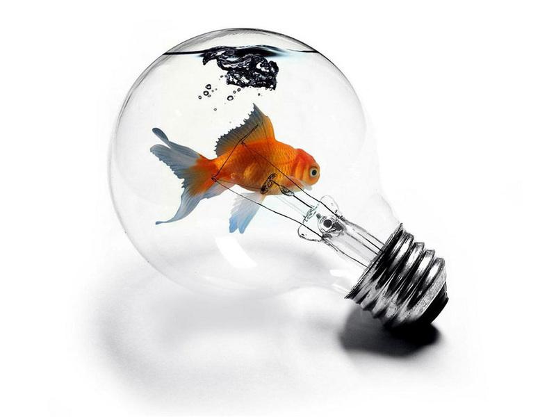 http://img.desktopwallpapers.ru/3d/pics/fish-in-lamp.jpg
