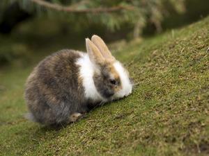 Обои Кролик