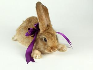 Обои Кролик с бантиком