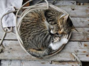 Обои Спящая кошка