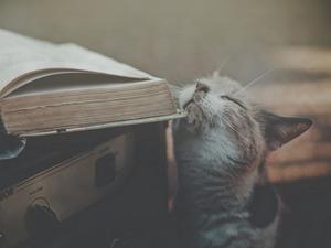 Обои Кот и книга