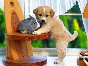Обои Кролик и щенок