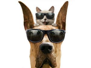 Обои Агент Пёс и агент Кот