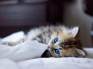 Обои Милый котёнок