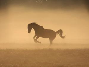Обои Лошадь в тумане