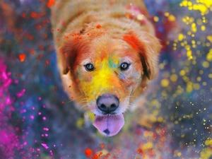 Обои Собака в краске