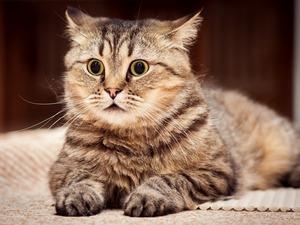 Обои Очумевший кот