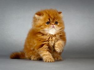 Обои Рыжий котёнок