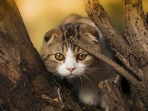 Обои Котёнок в засаде