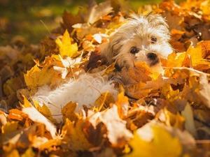 Обои Осенняя собака