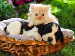 Обои Щенок и котёнок