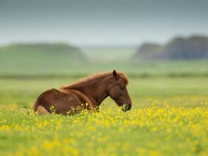 Обои Лошадка