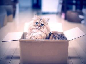 Обои Кот в коробке