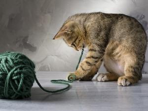 Обои Котёнок с клубком