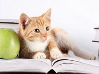 Обои для рабочего стола: Умный кот