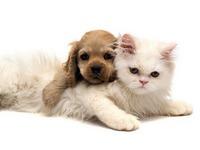 Обои для рабочего стола: Щенок и котёнок