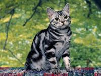Обои для рабочего стола: Кот сложной расцветки