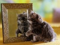 Обои для рабочего стола: Котёнок с зеркалом