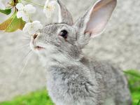 Обои для рабочего стола: Кролик