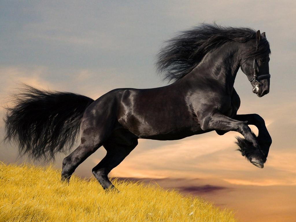 http://img.desktopwallpapers.ru/animals/pics/12e77c5d46ea396268be54-1024.jpg