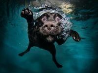 Обои для рабочего стола: Собака под водой