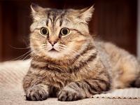Обои для рабочего стола: Очумевший кот