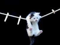 Обои для рабочего стола: Котёнок на бельевой верёвке