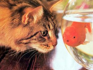 Обои Кошка и рыбка