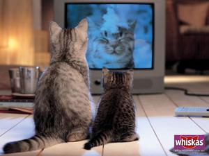 Обои Кошка и котёнок