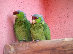 Обои Попугаи