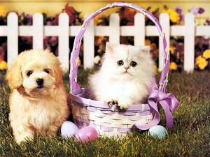 Обои Пёс и кот