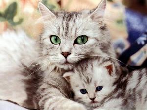 Обои Кошка и котенок