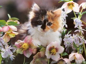 Обои Котенок в цветах