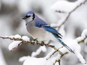 Обои Синяя птица