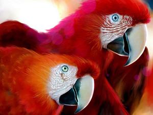 Обои Попугаи Ара