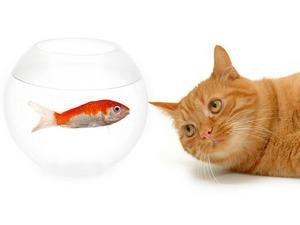 Обои Кот и рыбка