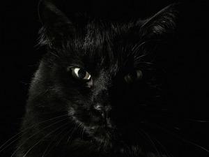 Обои Чёрный кот