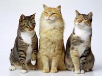 Обои для рабочего стола: Кошки