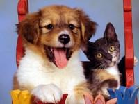 Обои для рабочего стола: Кошка и собака