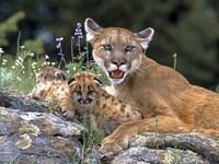 Обои для рабочего стола: Львица с детёнышем