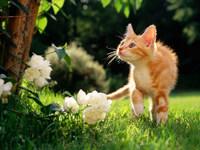 Обои для рабочего стола: Котёнок в саду