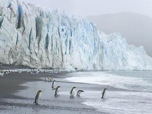 Обои Пингвины на берегу