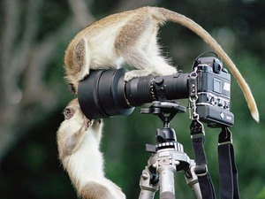 Обои Мартышки и фотоаппарат