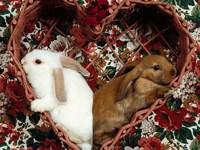 Обои для рабочего стола: Кролики