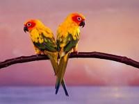 Обои для рабочего стола: Попугаи